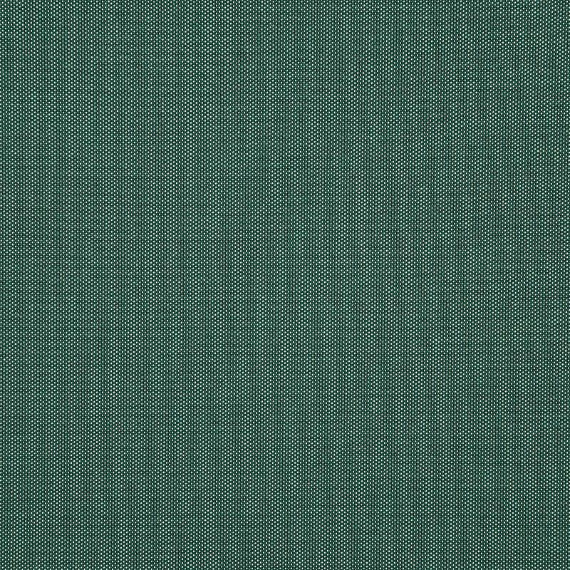 Tresco-Eucalyptus_4670